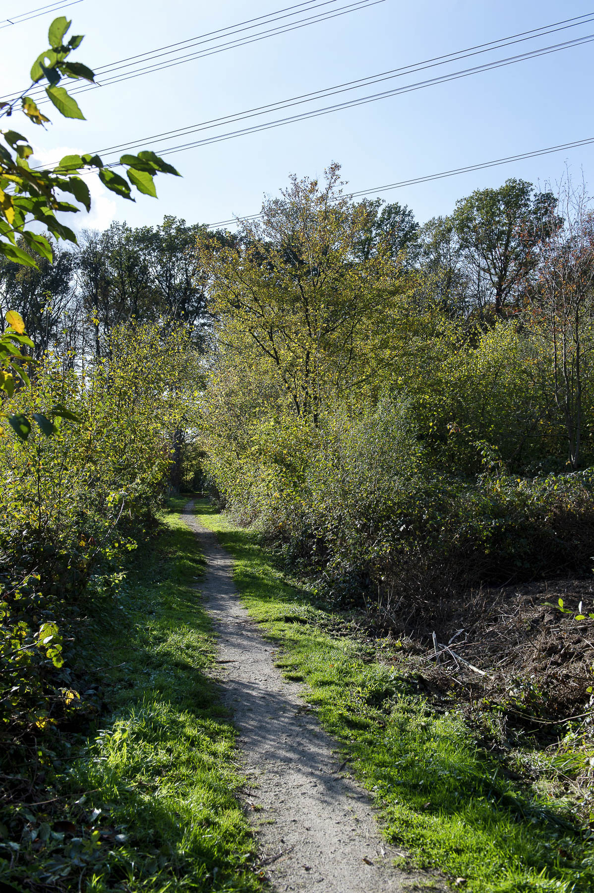 Landschaftsfoto des Lyrikweges bei der alten Eibe nahe des Rüschhauses.